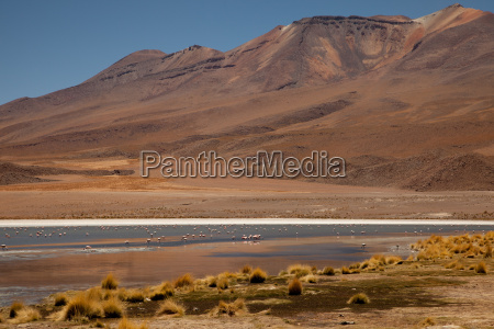 andean landscape with laguna
