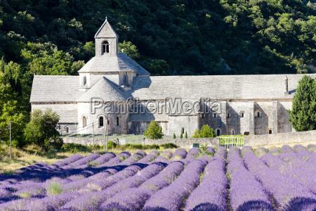 senanque abtei mit lavendelfeld provence frankreich
