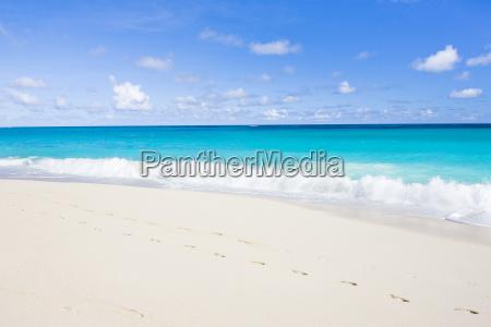 strand barbados karibisch karibik natur