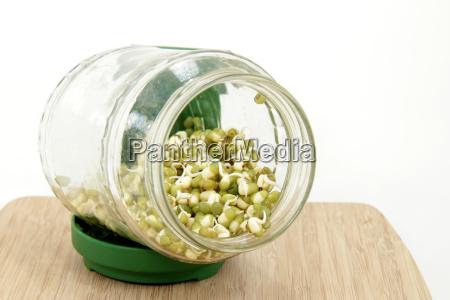 mungobohnenkeimlinge im keimglas