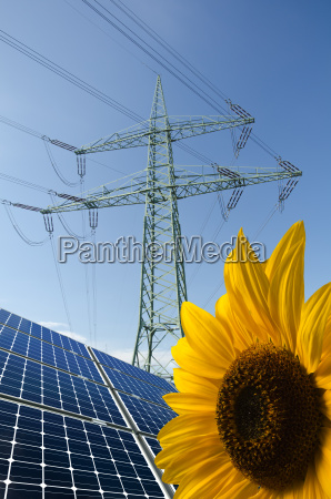 solar panels sunflower and utility pole