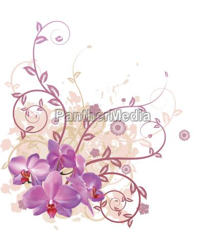 kuehle orchidee blumenhintergrund
