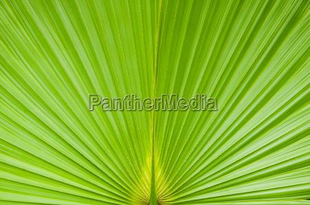 gruenes palmenblatt