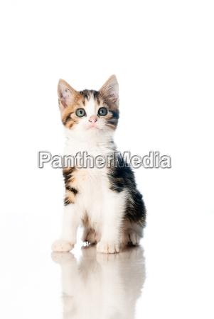 freisteller haustier kuscheltier abgeschieden isolierte katzenbaby