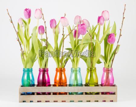 rosane und lilane tulpen