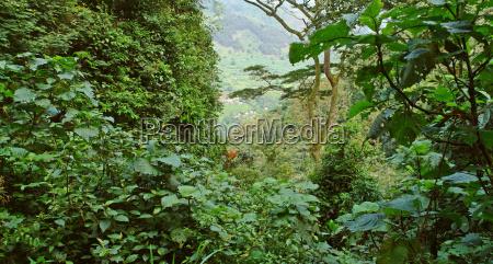 rain forest vegetation in the bwindi