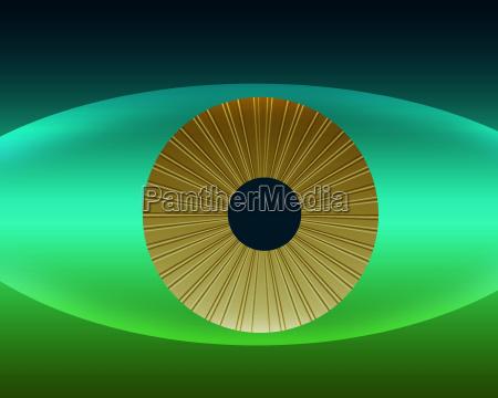 symbolisch auge oculus ophthalmos organ blick