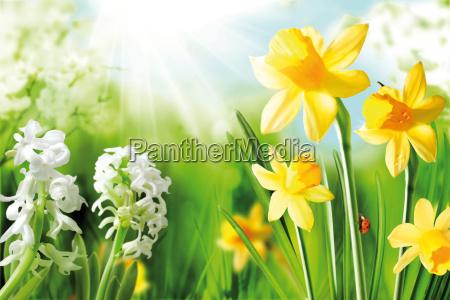 cheerful spring bulbs