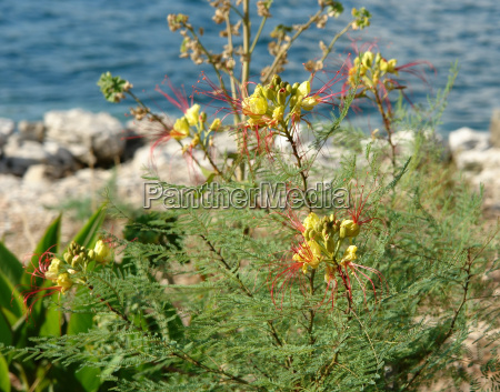 colorful mediterranean plant