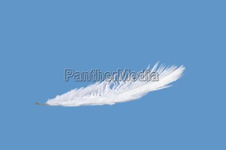 feder mit blauem himmel