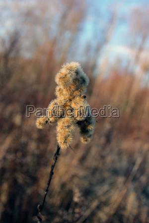 dried plant parts