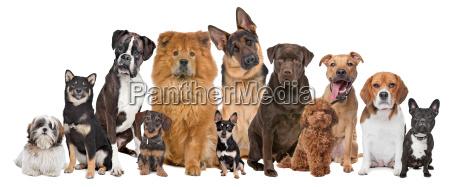 gruppe von zwoelf hunden