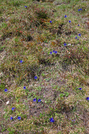 blue protected sheltered alps conservation of
