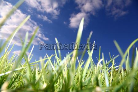 azul medio ambiente agricultura nube campo