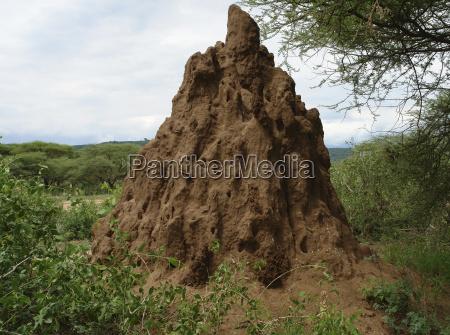 termite hill in africa