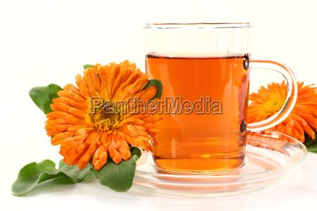 te beber bebida flor planta calendula