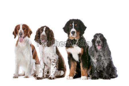 vier hunde in einer reihe