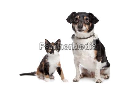 kaetzchen und jack russel terrier