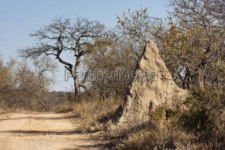 termitenhuegel im greater krueger nationalpark in