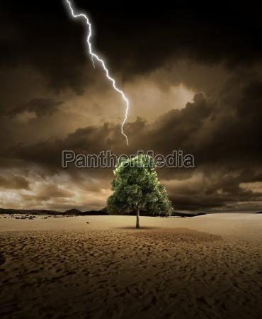 beleuchtung auf wuestenbaum