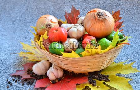 lese gemuese dekoration ausschmueckung zwiebel saison