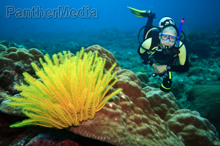 diver and feather star