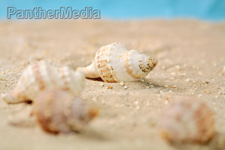 sea snails in the sand