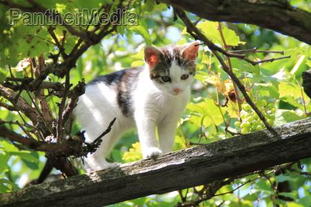 eine junge katze in einem baum