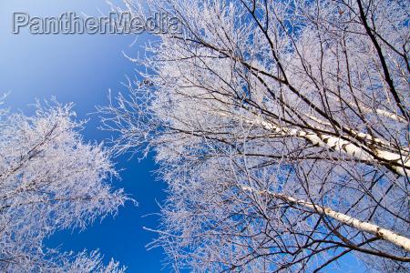 winterlandschaft mit gefrosteten baeumen