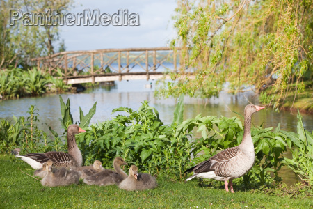 family on meadow at lake with