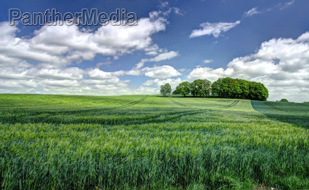 konventionelle agrarlandschaft
