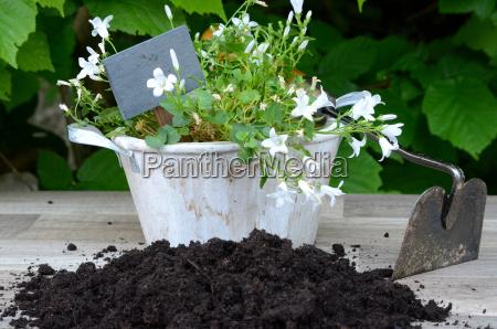 plants garden potting soil