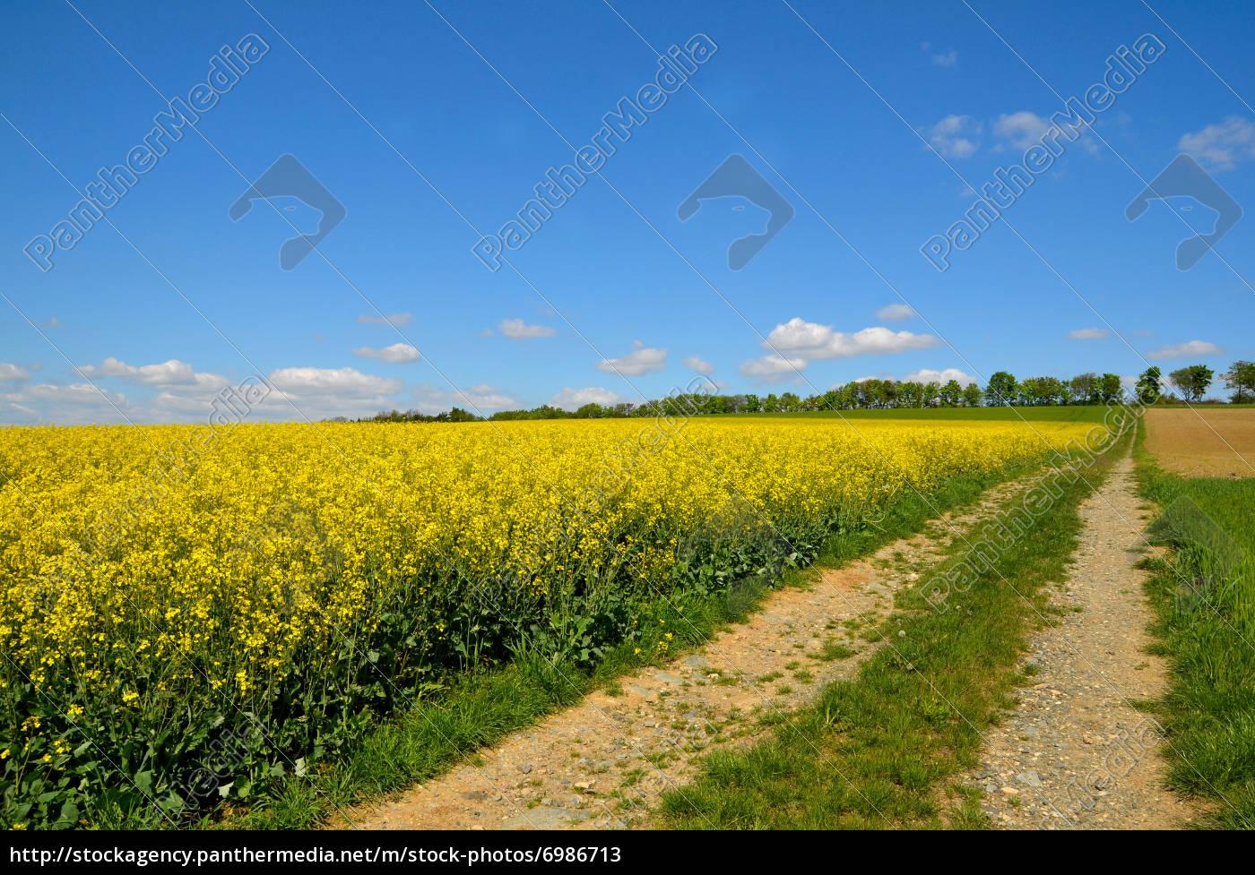 Landschaft Wolken Wiese Rapsfeld - Lizenzfreies Bild - #6986713 ...