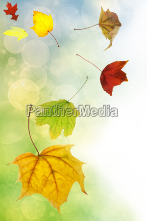 autumn leaves on soft color background
