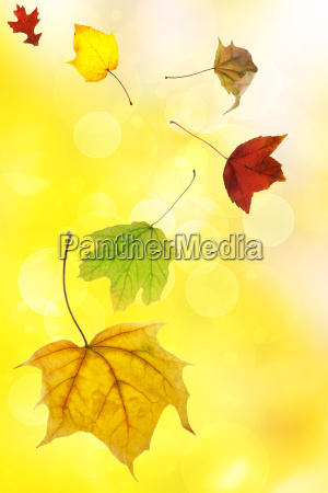 autumn leaves on soft yellow background