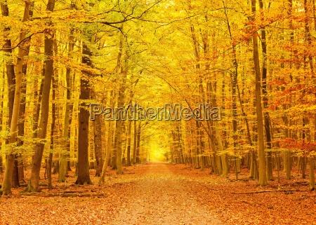 pathway in der herbst park