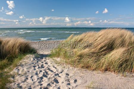 weg zum strand durch duenen an