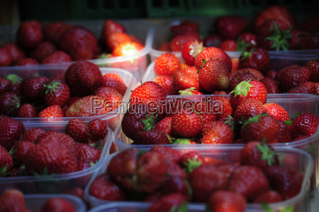 strawberrystrawberriesberriesfruitfruitsplantplants
