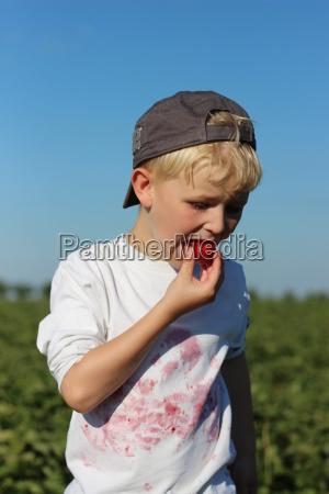 erdbeeren zum selberpfluecken