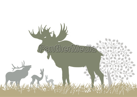 moose and forest animals