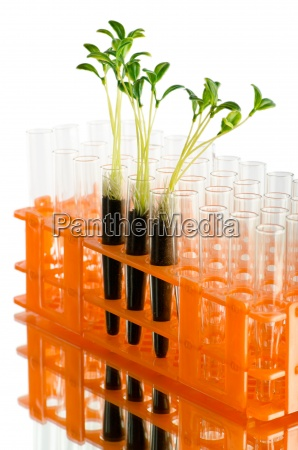 lab experiment with green leaves