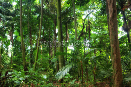 beautiful rain forest trees