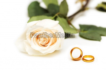 rose and wedding rings isolated on