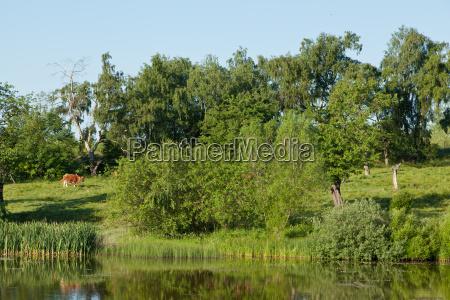 animal husbandry at the lake