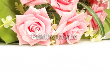 roses at the background and space