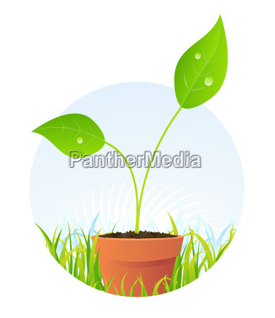 spring plant seed in pot