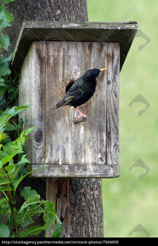 brut, nest, nisten, nistkasten, vogelhaus, star, vogel, vögel, tiere, tiere - 7504059