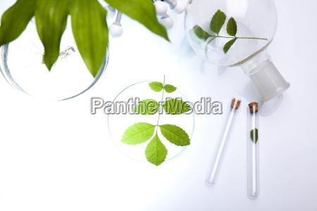 laborglas pflanzen im labor enthaelt