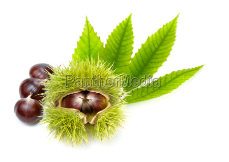 arrangement with fresh chestnuts and young