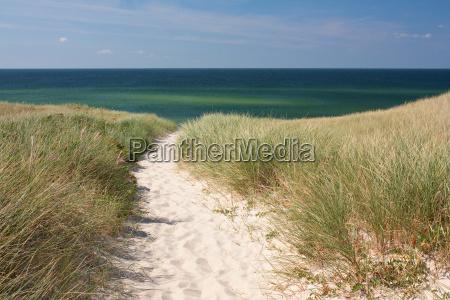 path to the beach through dunes